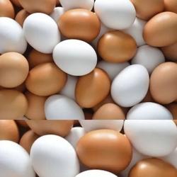 Kızılkaya Oyuncak - Oyuncak Plastik Yumurta 10 Adet Filede